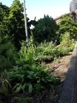 HH Herb Garden